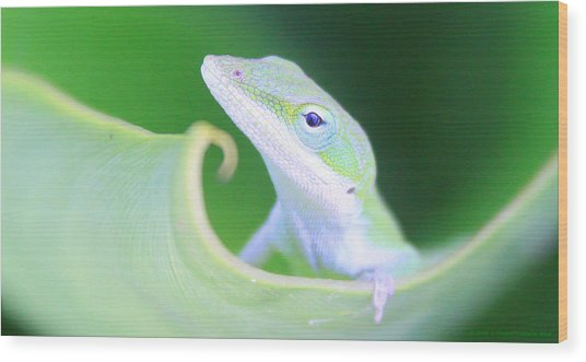 Hello, Anole. 2 Wood Print