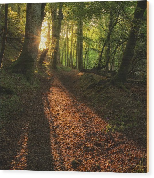Wood Print featuring the photograph Henllan Woods Sunrise by Elliott Coleman