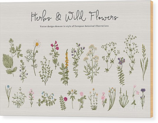 Herbs And Wild Flowers. Botany. Set Wood Print