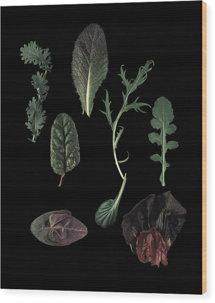 Herbs Leaves On Black Wood Print by Davies And Starr