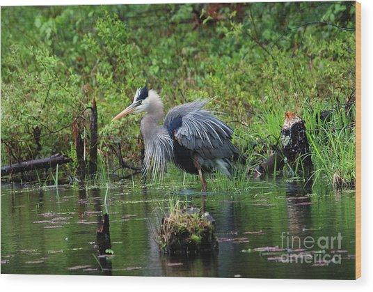 Heron In Beaver Pond Wood Print
