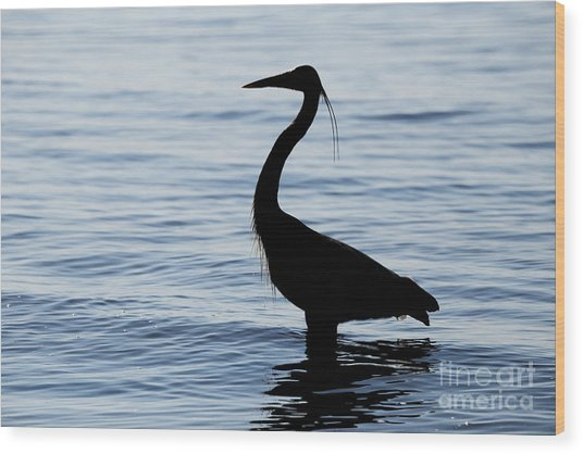 Heron In Silhouette Wood Print