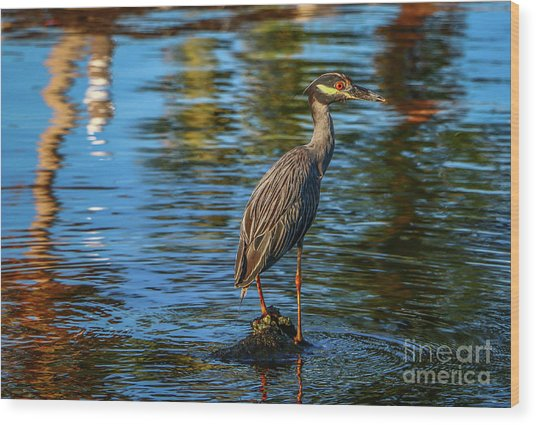Heron On Rock Wood Print
