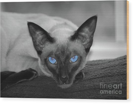 Hey There Blue Eyes - Siamese Cat Wood Print