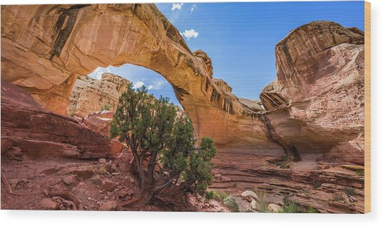 Hickman Natural Bridge Wood Print