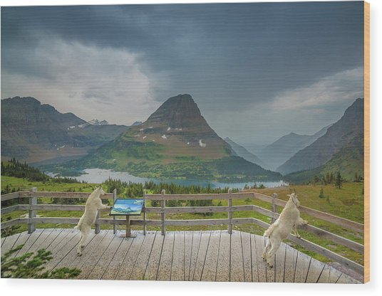 Hidden Lake Overlook // Glacier National Park Wood Print