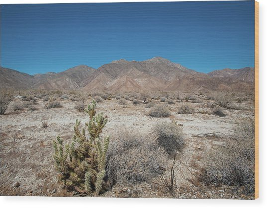 High Desert Cactus Wood Print