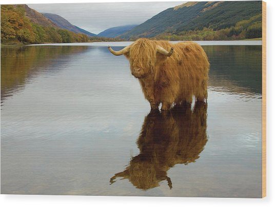 Highland Cow Wood Print by Empato