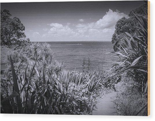 Hiking On Tiritiri Matangi New Zealand Bw Wood Print