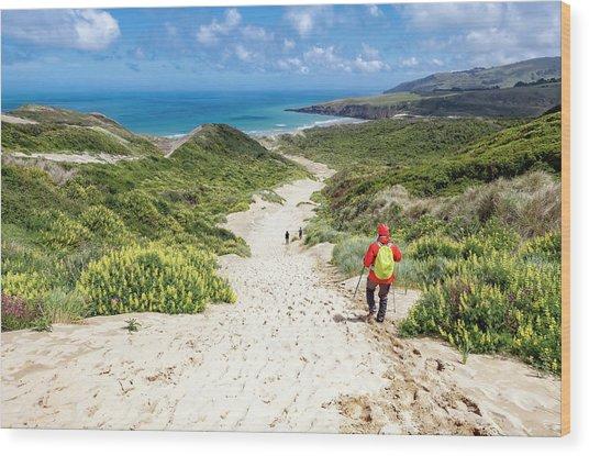 Hiking To Sandfly Bay New Zealand Wood Print