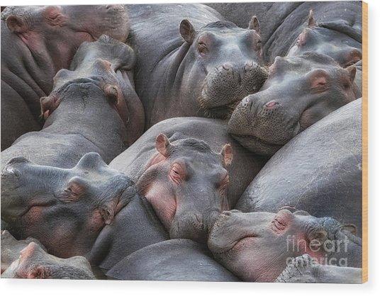Hippo Pod Resting In The Mara River Wood Print