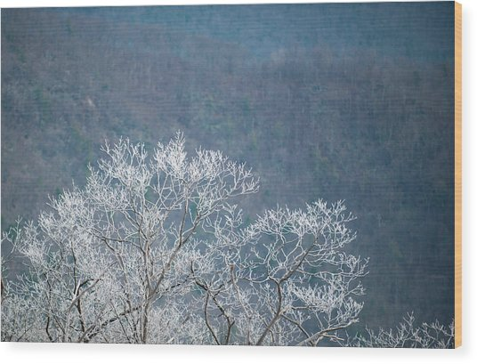 Hoarfrost Collects On Branches Wood Print
