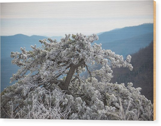 Hoarfrost In The Blue Ridge Mountains Wood Print