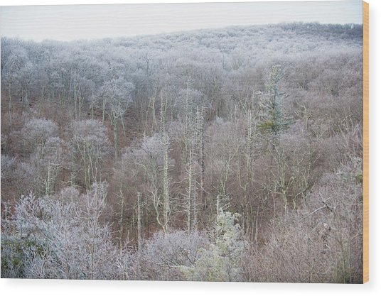 Hoarfrost In The Tree Tops Wood Print