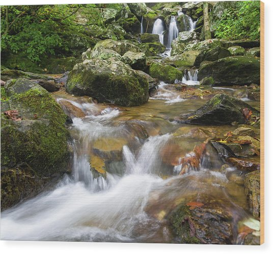 Wood Print featuring the photograph Hogcamp Branch Falls I by William Dickman