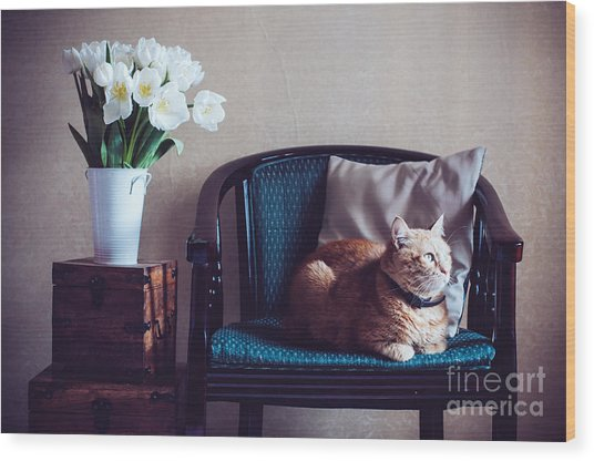 Home Interior, Cat Sitting In An Wood Print