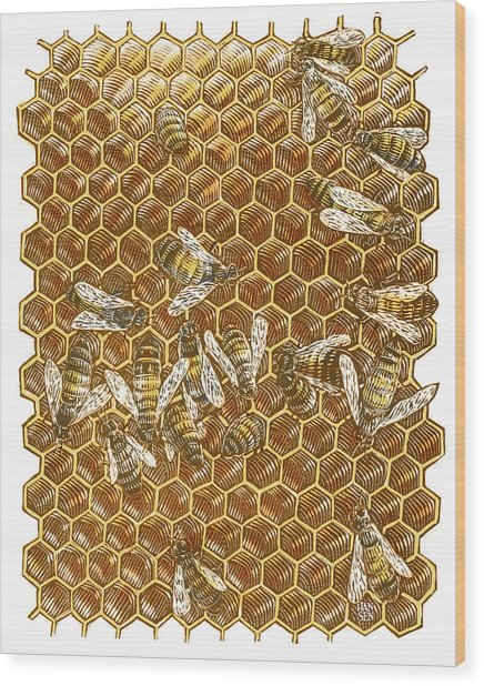 Wood Print featuring the drawing Honey Bees by Clint Hansen