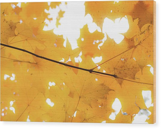 Honey Colored Happiness Wood Print