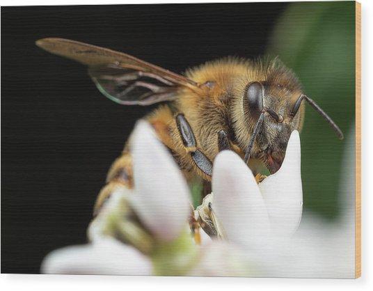 Honeybee Peeking Wood Print