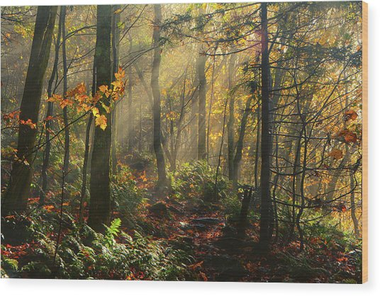 Horizontal Rays Of Sun After A Storm Wood Print
