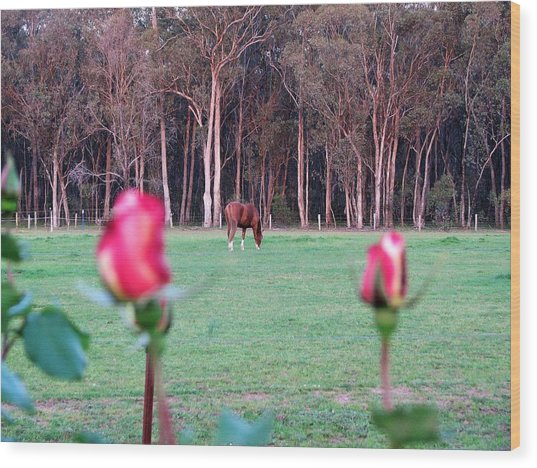 Horse And Roses Wood Print