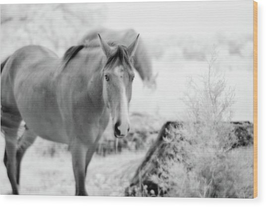 Horse In Infrared Wood Print