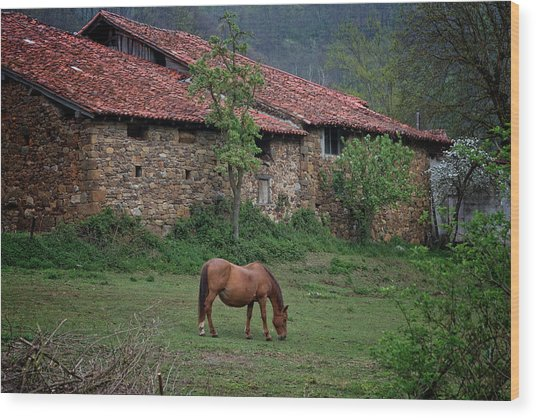 Horse In The Field Next To A Rural House Wood Print