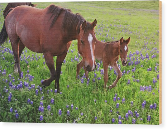 Horse On Bluebonnet Trail Wood Print