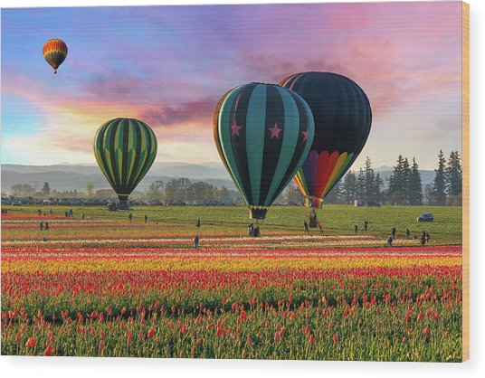 Hot Air Balloons At Sunrise Wood Print by David Gn Photography