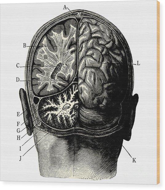Humain Brain -vintage Engraved Wood Print