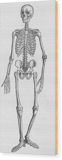 Human Skeleton Wood Print by Kean Collection