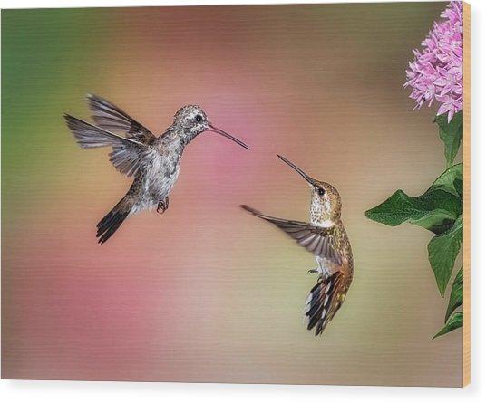 Hummingbird Battle Wood Print