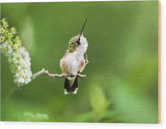 Hummingbird Flexibility Wood Print