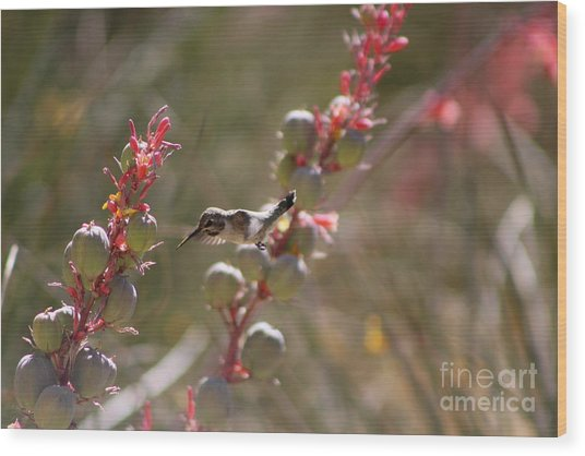 Hummingbird Flying To Red Yucca 1 In 3 Wood Print