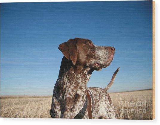 Hunting Dog Wood Print