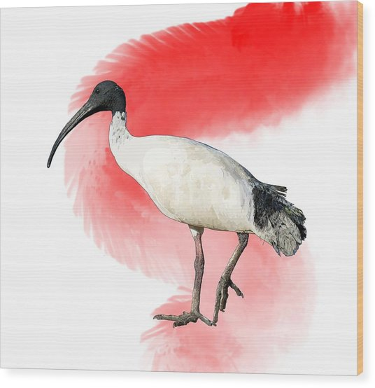 I Is For Ibis Wood Print
