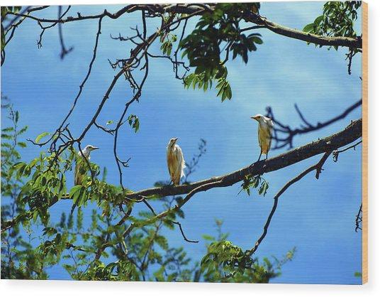 Ibis Perch Wood Print