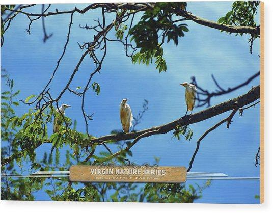 Ibis Perch - Virgin Nature Series Wood Print