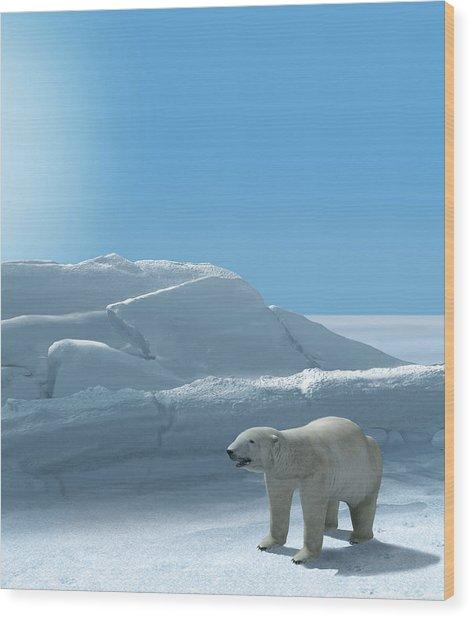 Ice Bear Hunting Polar Arctic Region Wood Print