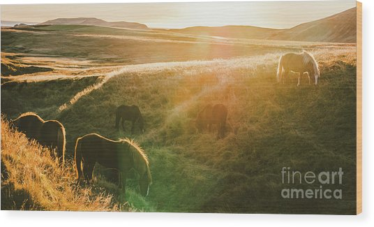 Icelandic Landscapes, Sunset In A Meadow With Horses Grazing  Ba Wood Print