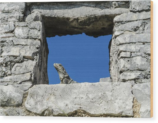 Iguana At Tulum Ruins Wood Print