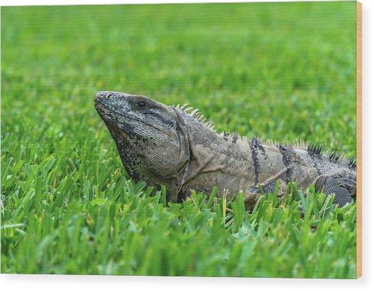 Iguana In Grass Wood Print