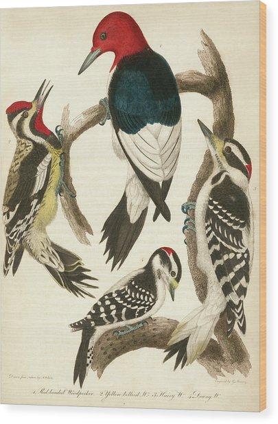 1. Red-headed Woodpecker. 2. Yellow-bellied Woodpecker. 3. Hairy Woodpecker. 4. Downy Woodpecker. Wood Print