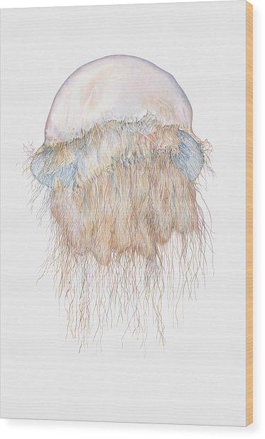 Illustration Of Nomuras Jellyfish Wood Print by Dorling Kindersley