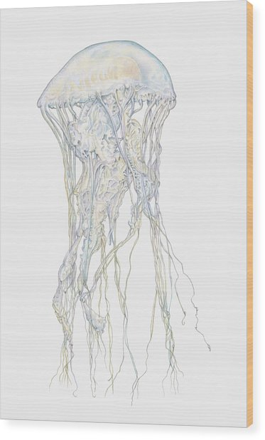 Illustration Of Sand Jellyfish Wood Print by Dorling Kindersley