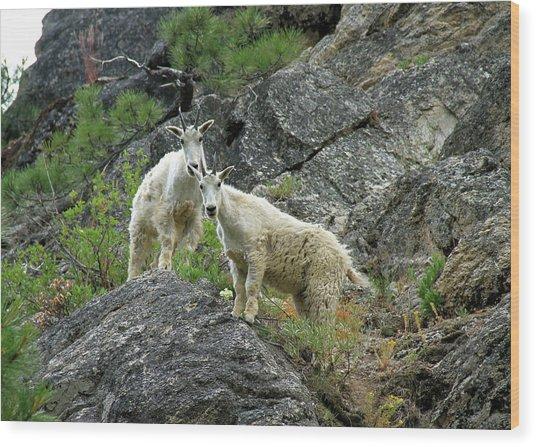 Idaho Mountain Goats Wood Print