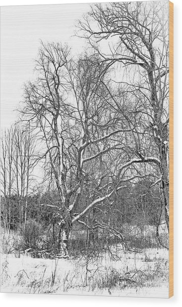 In Praise Of Willows 4 Bw Wood Print