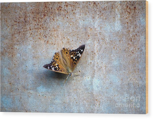 Industrious Butterfly Wood Print