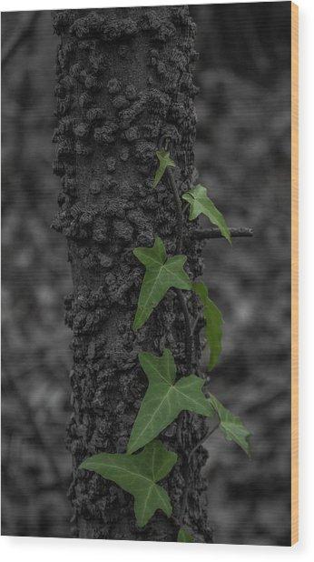 Industrious Ivy Wood Print