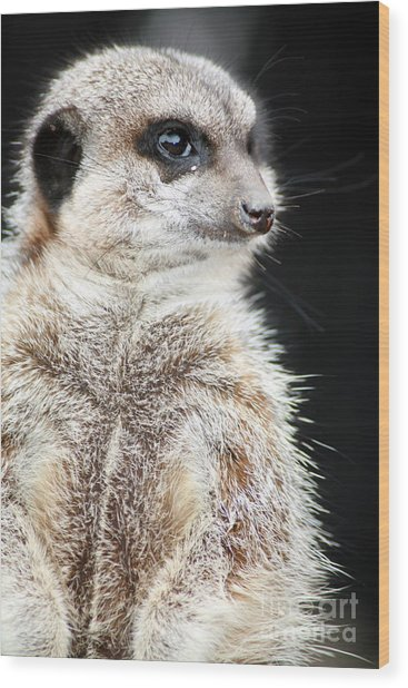 Inquisitive Meerkat On The Lookout Wood Print